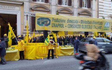 """Olivicoltori in protesta: """"Salviamo il nostro olio da contraffazione, concorrenza e cambiamenti climatici"""""""